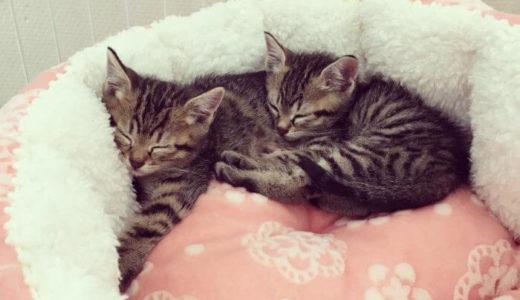 ジモティーで里親募集している子猫を引き取った流れを詳しく解説!
