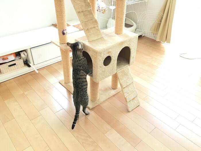キャットタワーとネコ