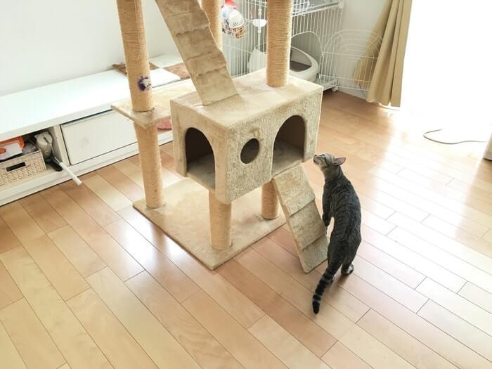 キャットタワーとネコ2