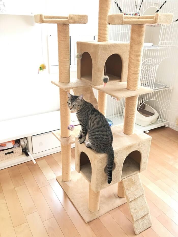 キャットタワーとネコ3