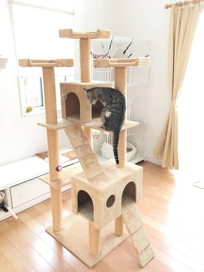 キャットタワーとネコ4