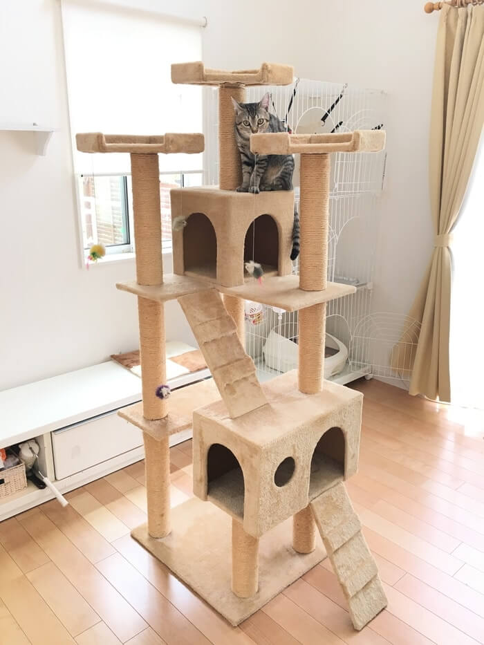 キャットタワーとネコ5