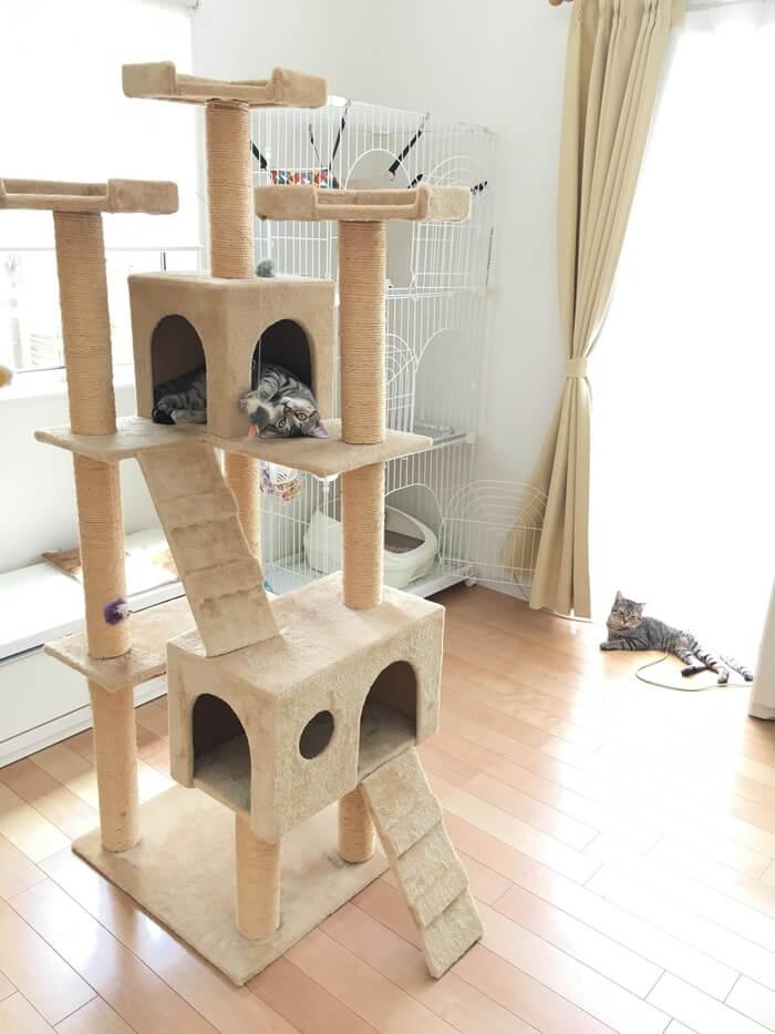 キャットタワーとネコ6