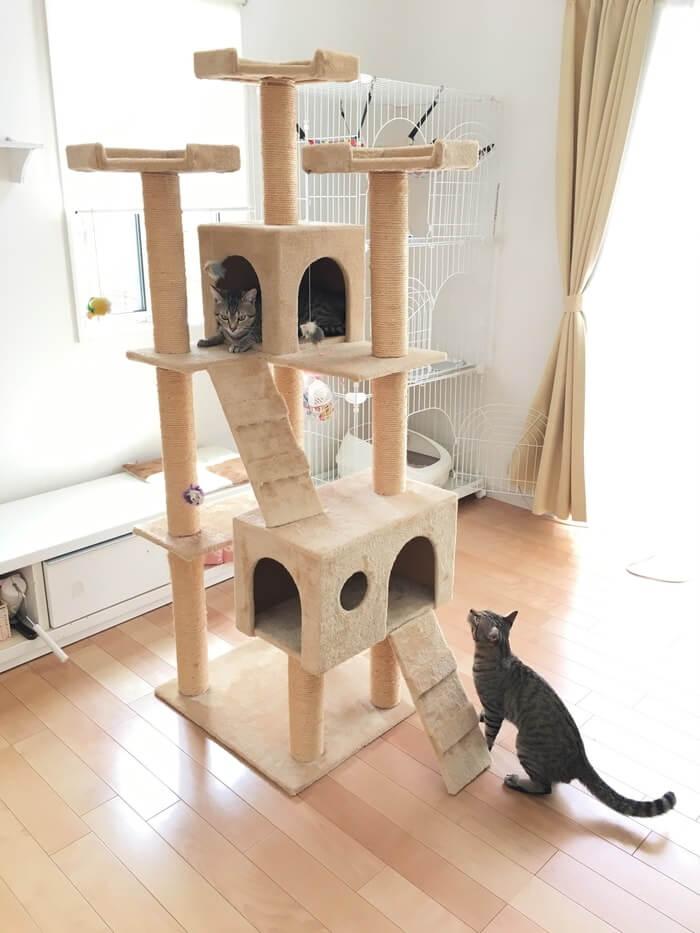 キャットタワーとネコ7