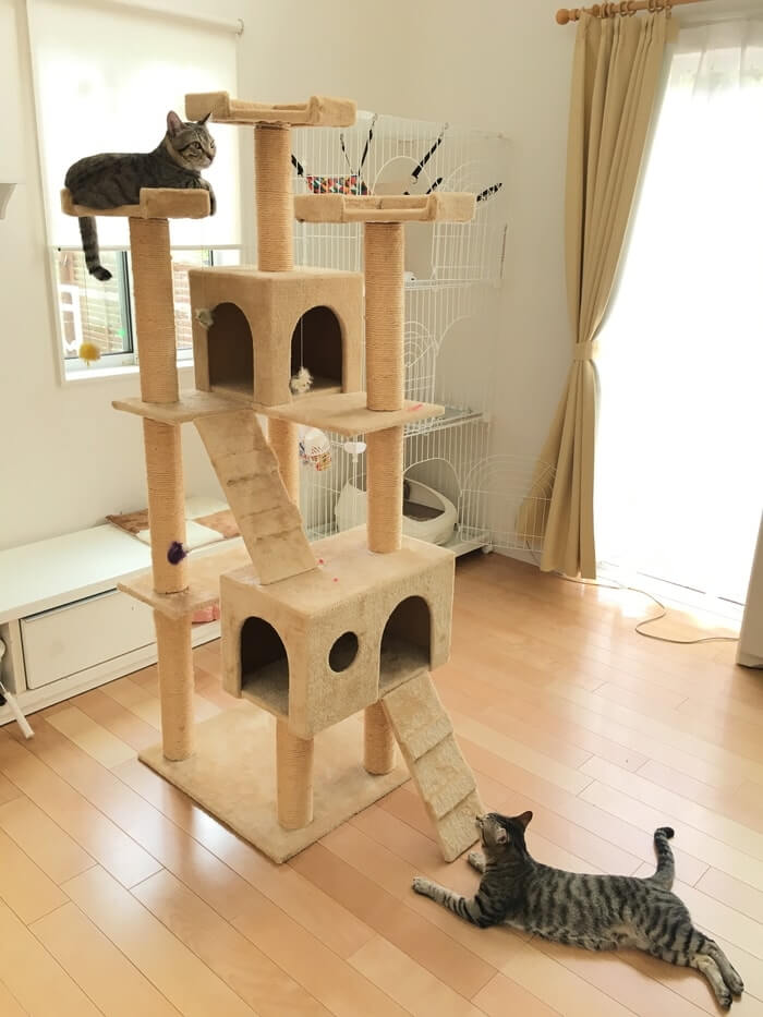 キャットタワーとネコ8
