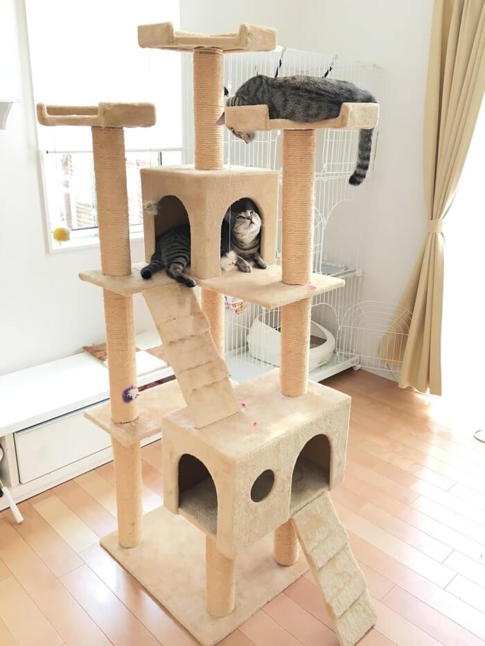キャットタワーとネコ9