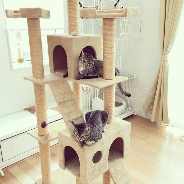 キャットタワーとネコ10