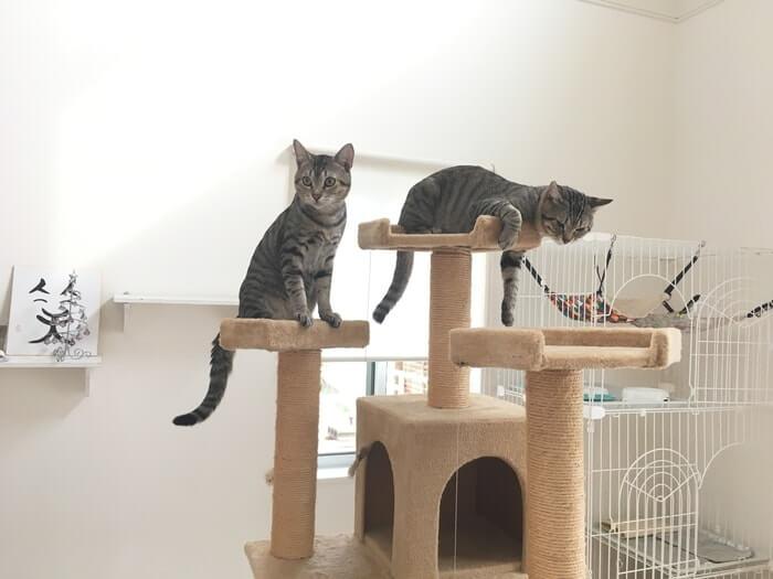 キャットタワーとネコ11