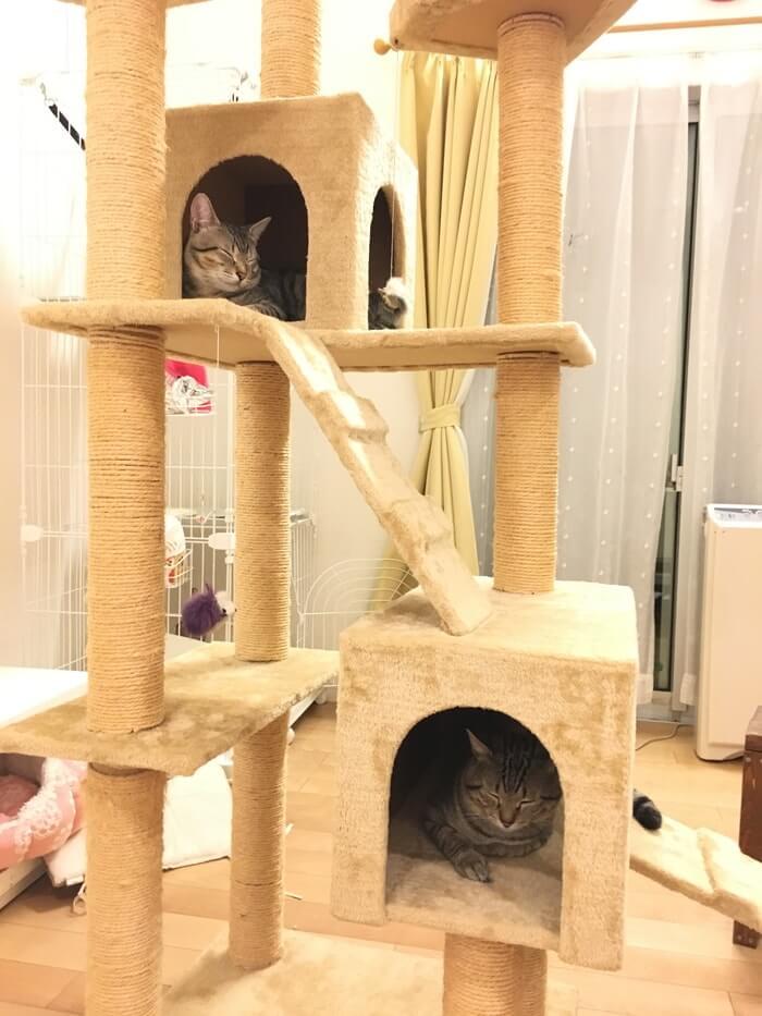 キャットタワーとネコ16